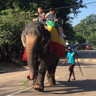 So sad to see this. Our first live elephant - we won't be riding one.