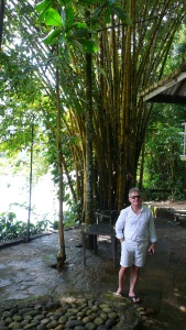 Big yellow bamboo
