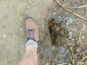 The hole left by Linda's foot (cow poo).