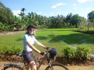 Great rice fields