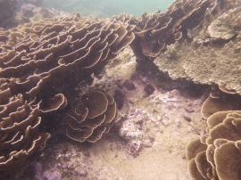 Coral, Mirissa Bay