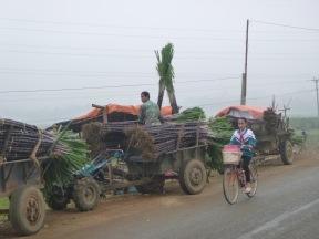 Trade supplies of sugar cane.