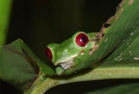 Those red eyes